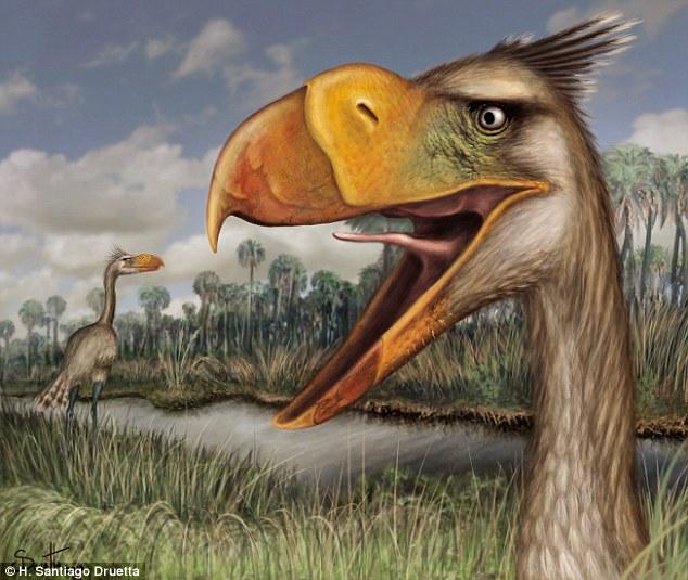 New Species Of Terror Bird